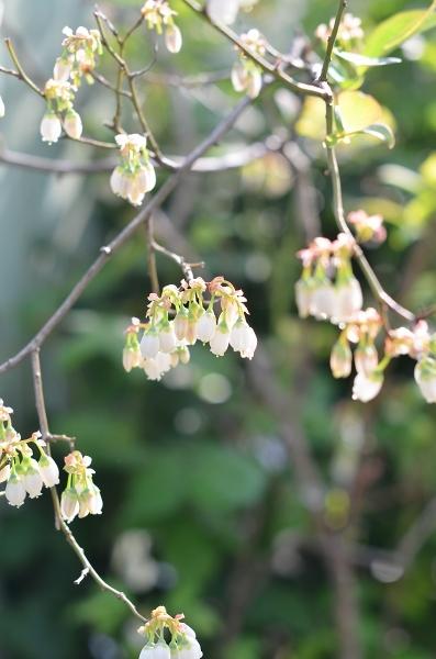 4月下旬の庭_d0025294_19255458.jpg