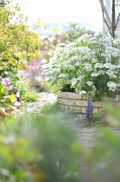 4月下旬の庭_d0025294_19265462.jpg