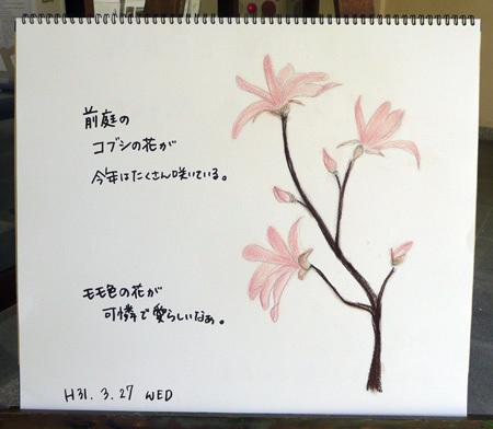 コブシ開花_b0364195_17064445.jpg