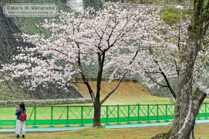 美術館前の桜_e0135098_00512077.jpg