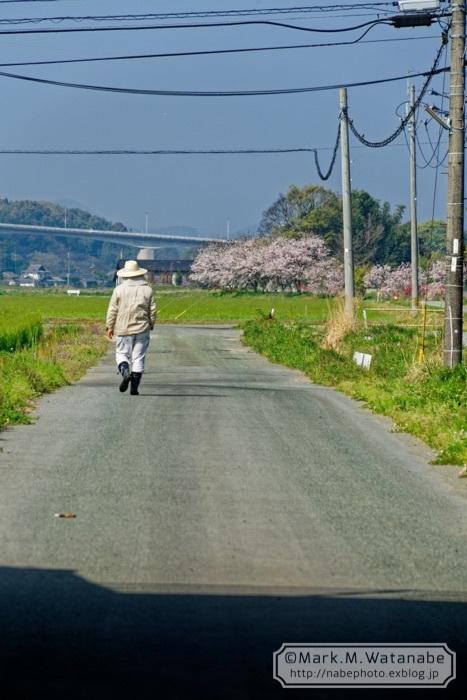 桜の想い出_e0135098_00581308.jpg