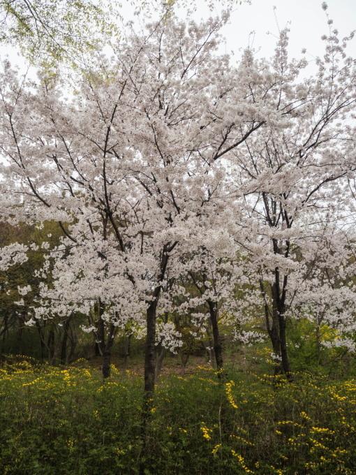 平成最後の海外旅行はデルタのマイルを使ってソウルへ(2)_f0276498_00030297.jpg