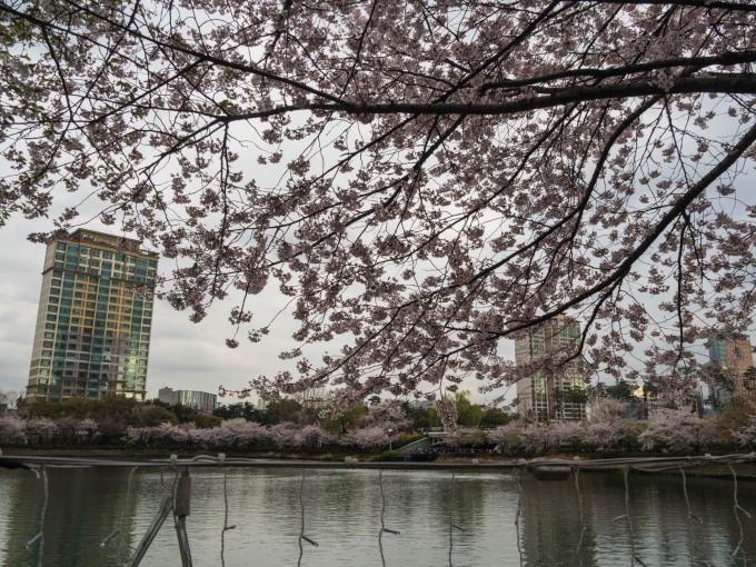 平成最後の海外旅行はデルタのマイルを使ってソウルへ(3)_f0276498_16191766.jpg
