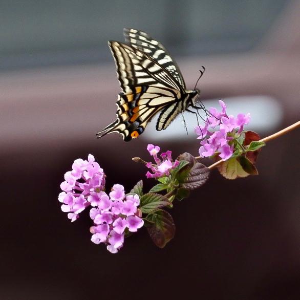 春が来た 07_f0099102_16401604.jpg