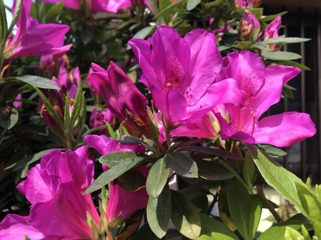 春の花たち_b0061107_22310739.jpeg
