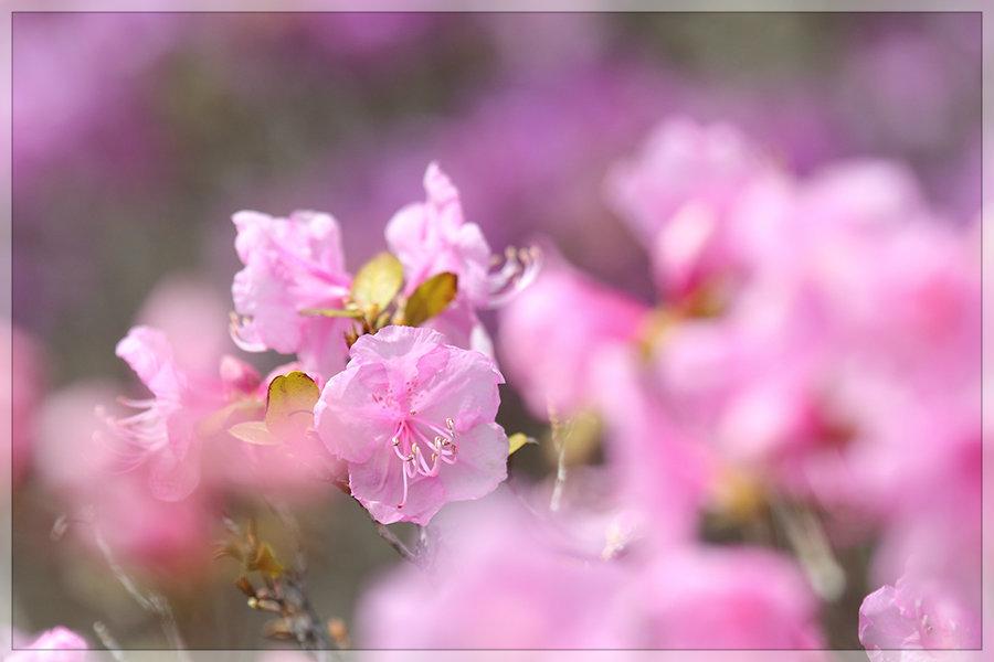 春路散歩_e0235910_17451125.jpg