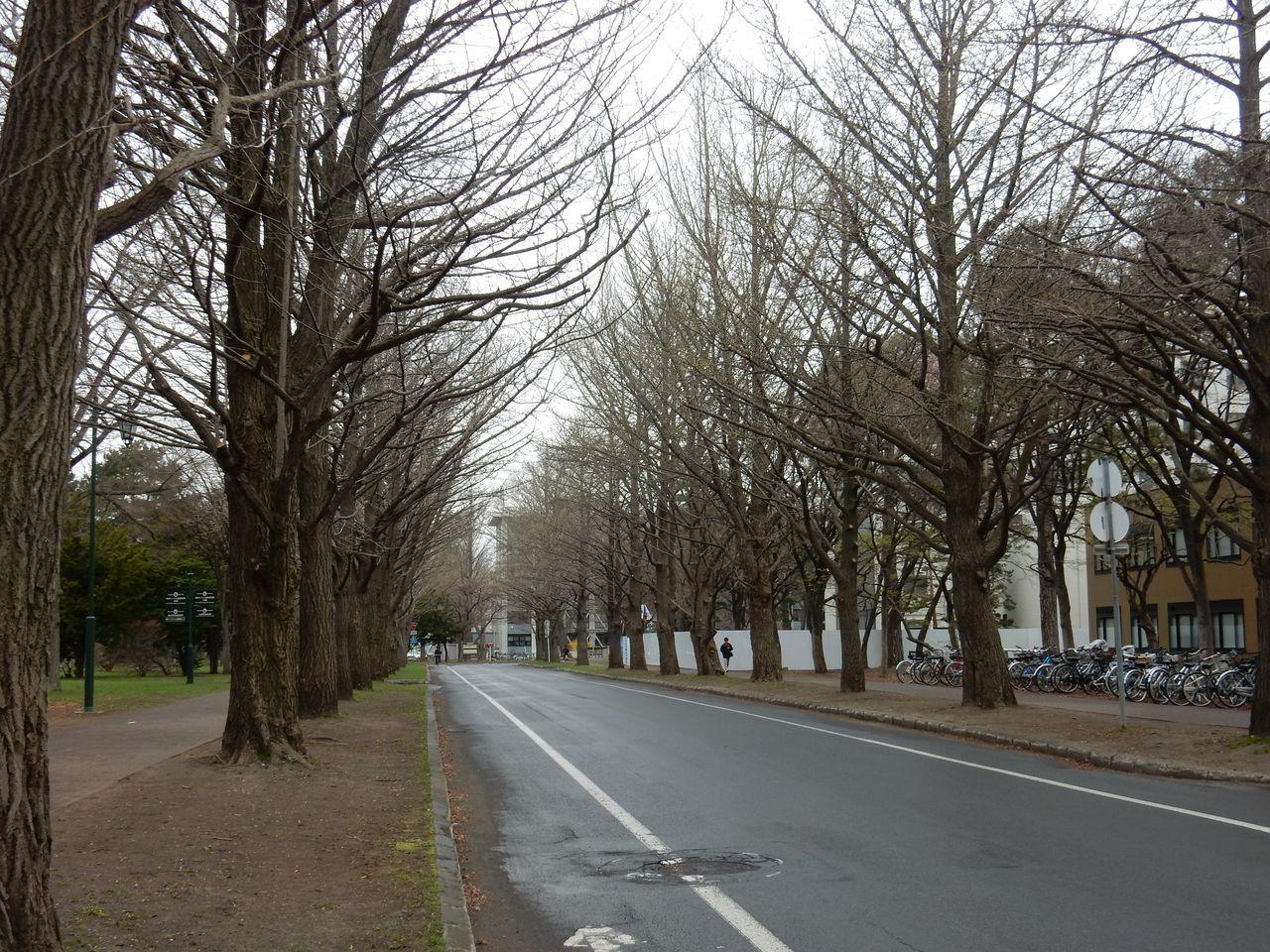 小雨の北大キャンパス_c0025115_22124337.jpg