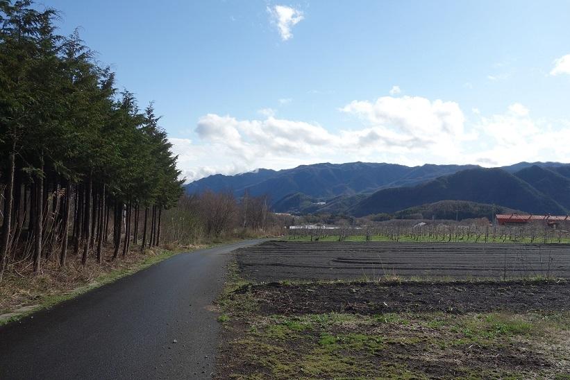 春らしく_e0112417_22062006.jpg