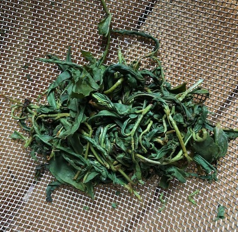 紅茶を作ってみました_b0158721_06590403.jpg