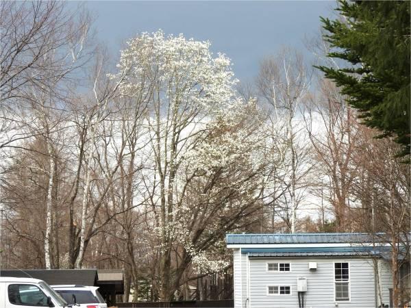 今週末の天気と気温(2019年4月26日):GW初日気温低い、装備品注意!_b0174425_16482145.jpg
