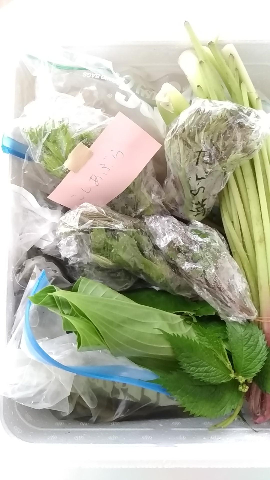山下さん家@鳥取から山菜が届きました(^^♪_b0204930_16135753.jpg