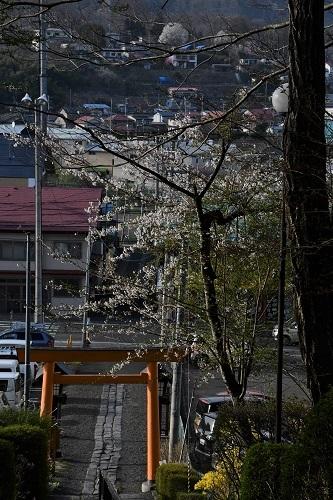 三戸大神宮 三戸町_c0299631_20154031.jpg
