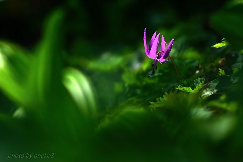 みちのく森の妖精3_d0067934_08475895.jpg