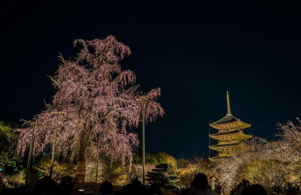 2019京都桜~東寺ライトアップ_e0363038_14341832.jpg