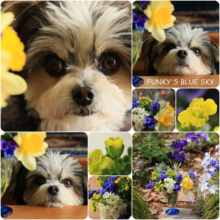 庭の小さなブーケ** (4月12日)_c0145250_09580458.jpg