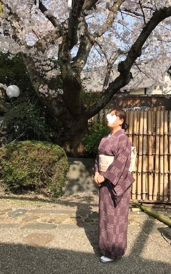 北野をどり最終・螺鈿兎帯・桜の簪・連休の営業。_f0181251_17155131.jpg