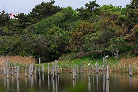 ★上の池に飛来した2羽のクロツラヘラサギ_e0046474_20104984.jpg
