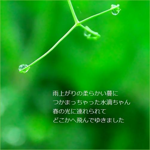 b0154475_14204776.jpg