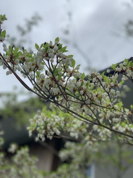 庭には何を植えたい?【満天星】←これ_e0325797_17073378.jpg