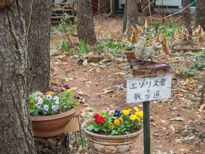 """春の草花と共に・・今日""""クリスマスローズガーデン""""始まりました。_f0276498_11391939.jpg"""