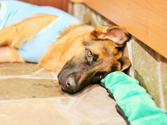 疲れた子犬は良い子犬_d0360206_00433658.jpg