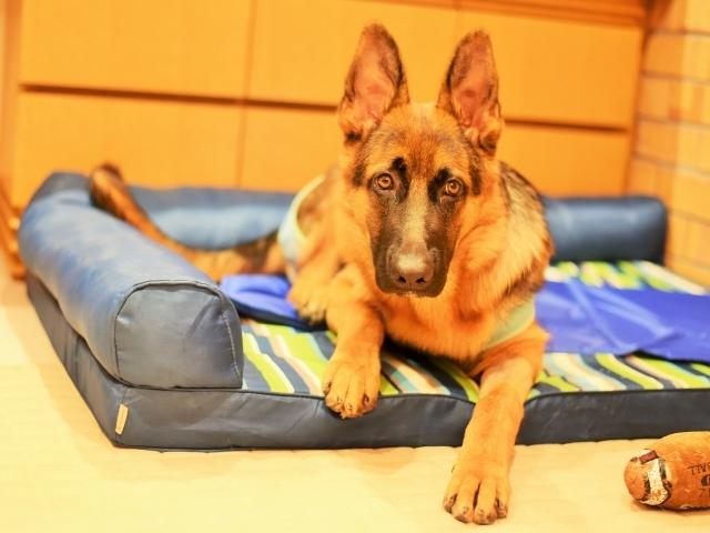 疲れた子犬は良い子犬_d0360206_00433677.jpg