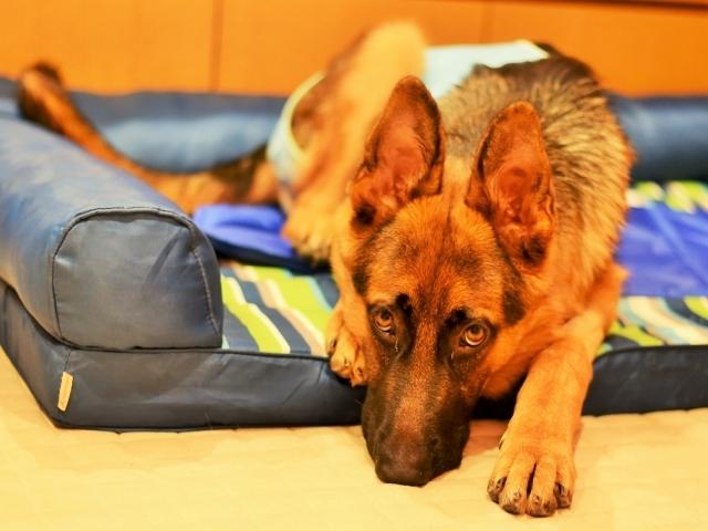 疲れた子犬は良い子犬_d0360206_00433695.jpg