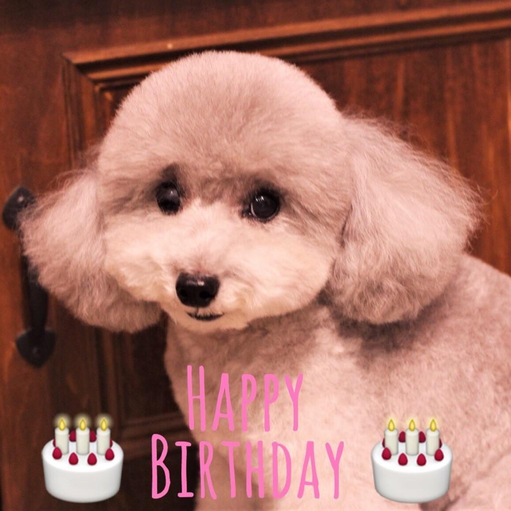 Happy Birthday ☆ シュシュちゃん_d0060413_18561116.jpg