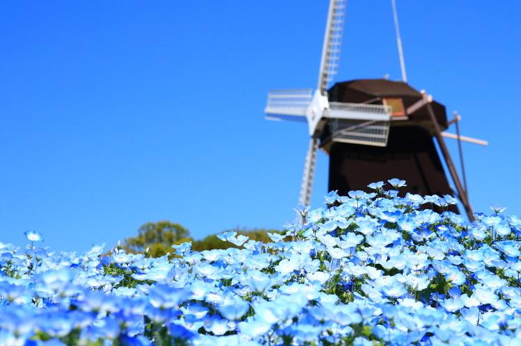 青色の風_f0209122_09020589.jpg