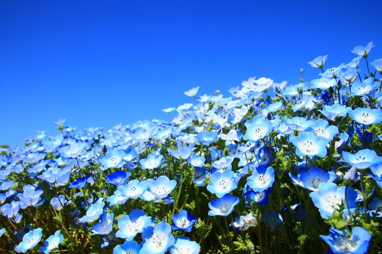 青色の風_f0209122_09030252.jpg