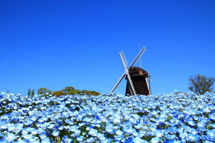 青色の風_f0209122_09033009.jpg