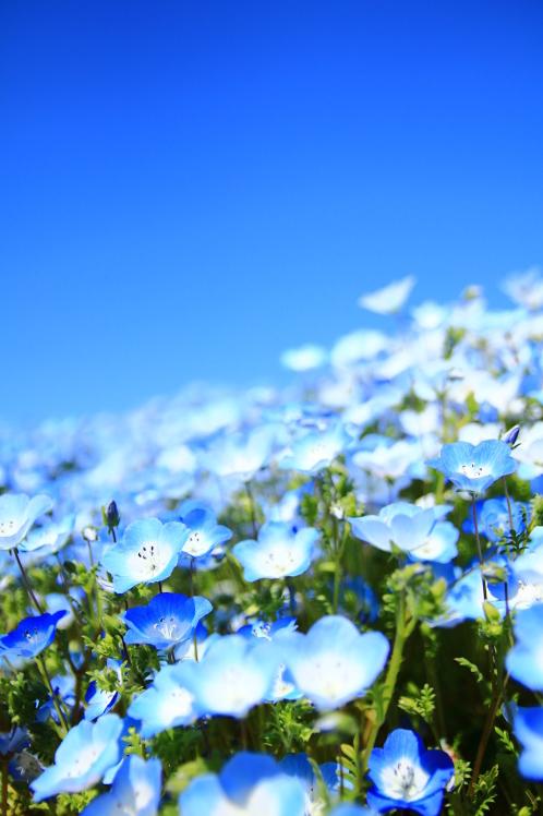 青色の風_f0209122_09044188.jpg