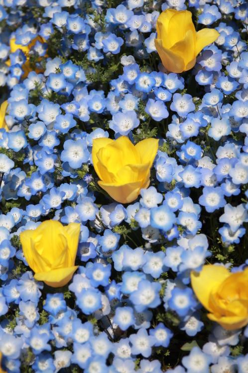 青色の風_f0209122_09051276.jpg