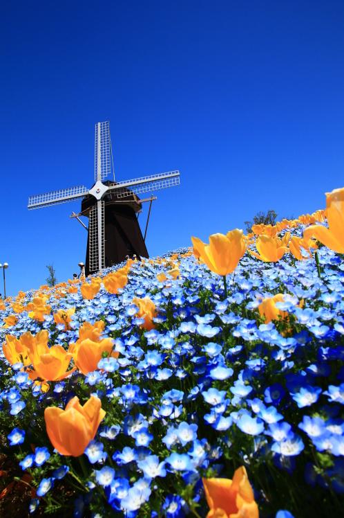 青色の風_f0209122_09054500.jpg