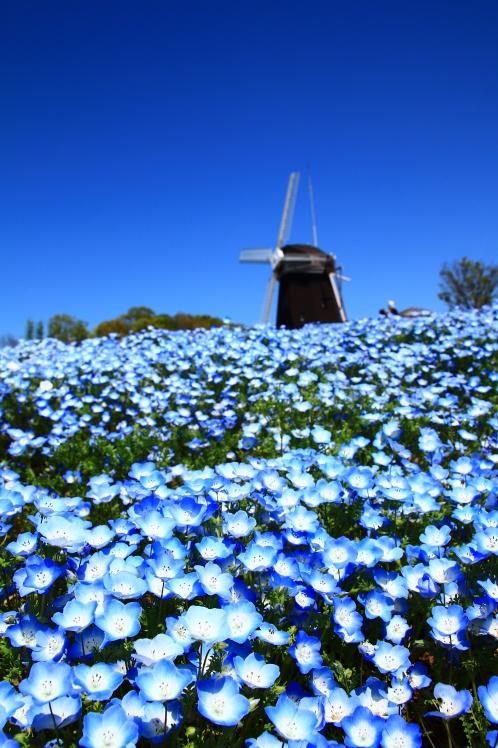 青色の風_f0209122_09074822.jpg