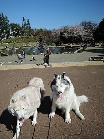 散歩屋日誌【4】_c0062832_15541767.jpg