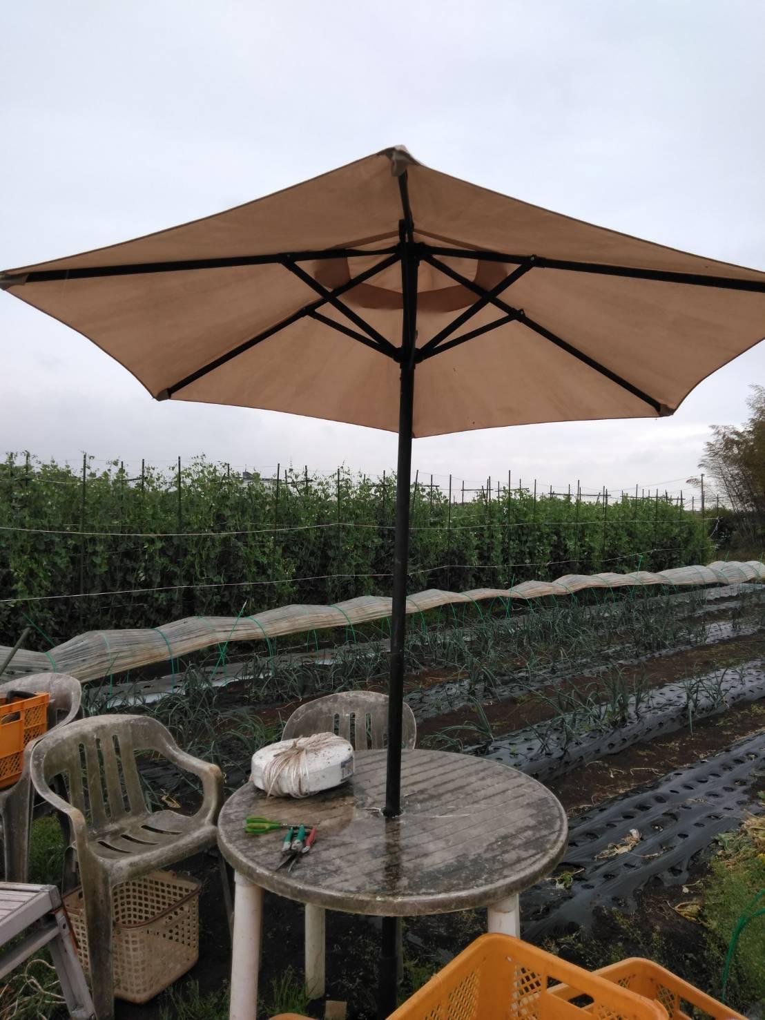トマトの定植今朝を予定していましたが 雨で断念 明日水が引いたら・・・_c0222448_15440065.jpg