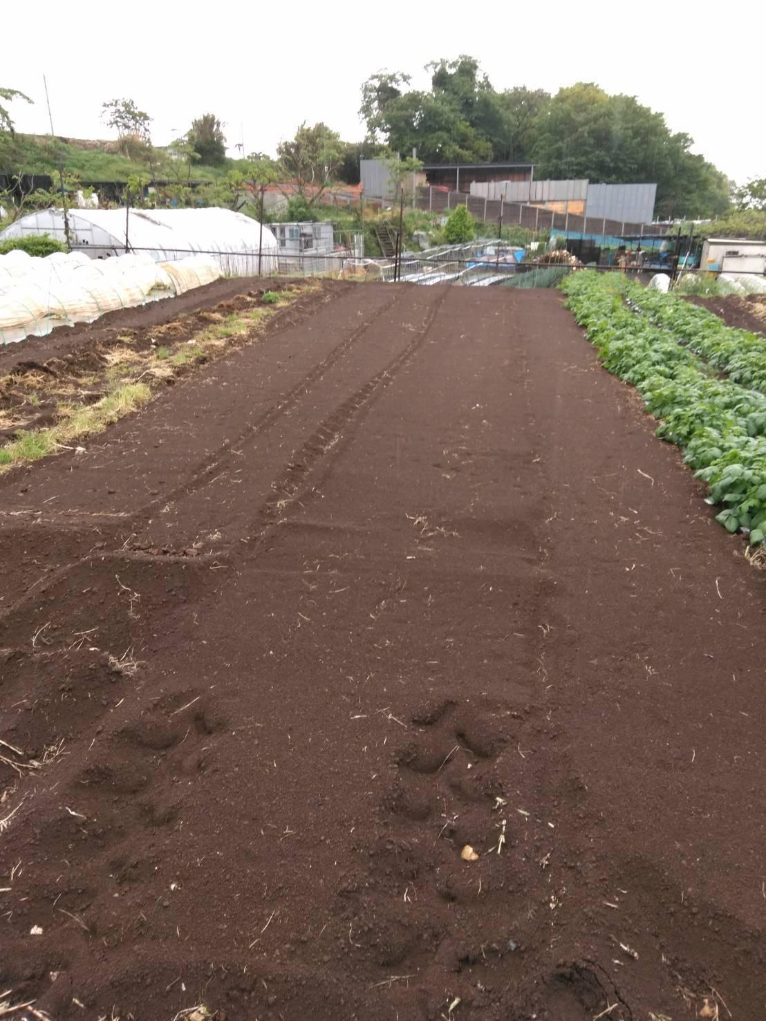 トマトの定植今朝を予定していましたが 雨で断念 明日水が引いたら・・・_c0222448_15441435.jpg
