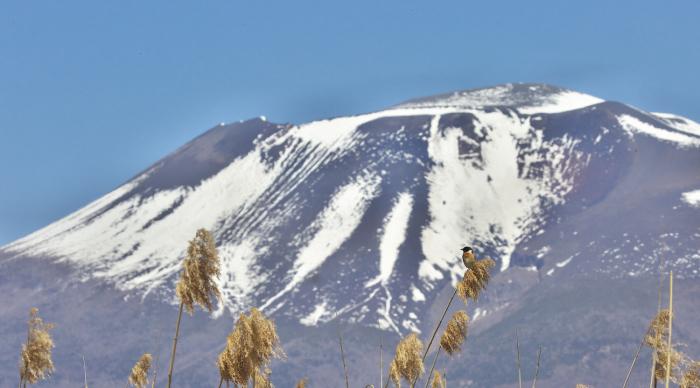 浅間山とノビタキ_c0217255_07261096.jpg