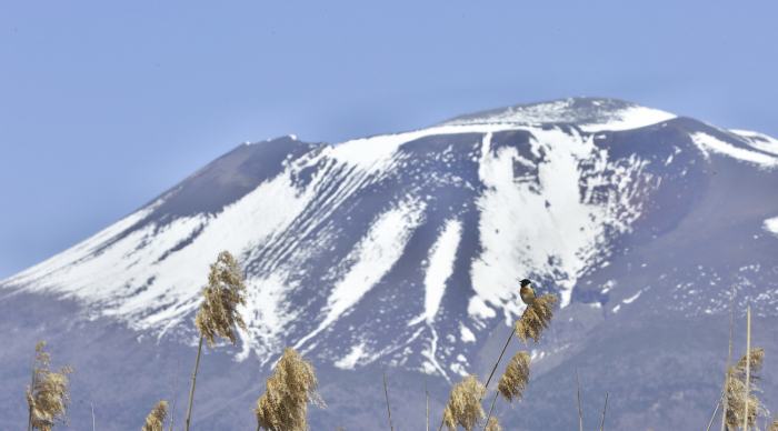 浅間山とノビタキ_c0217255_07261958.jpg