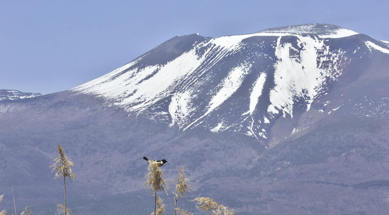 浅間山とノビタキ_c0217255_07262732.jpg