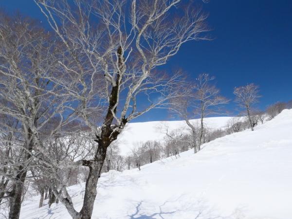 月山でスキー!_a0351368_20570861.jpg