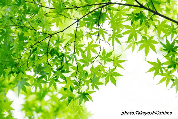 撮影会藤の花編_f0361287_19463233.jpg