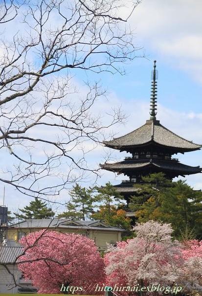 奈良の桜と鹿_f0374092_14451133.jpg