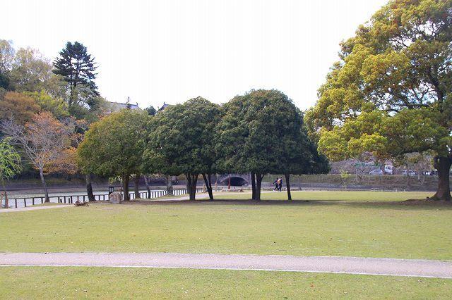 奈良の桜と鹿_f0374092_14565196.jpg