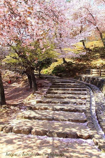 奈良の桜と鹿_f0374092_15065651.jpg