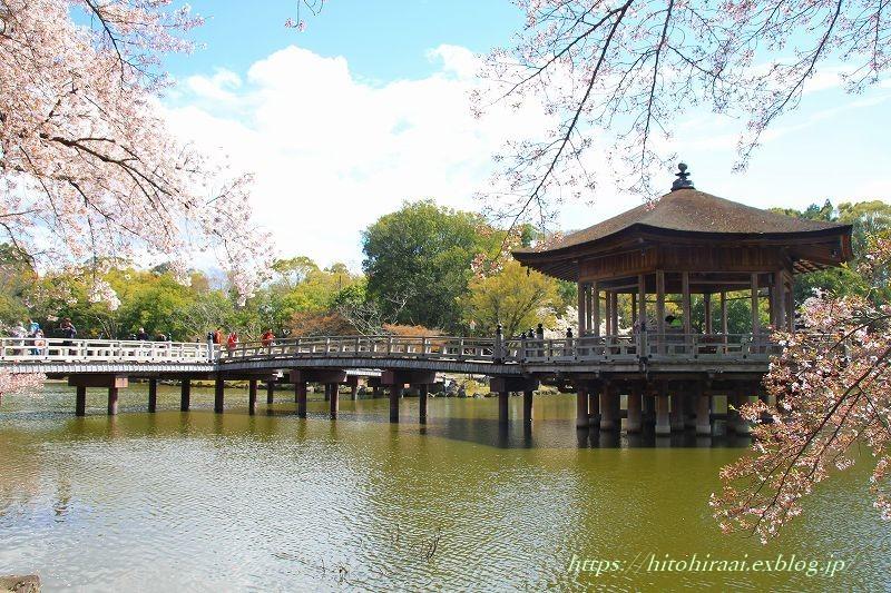 奈良の桜と鹿_f0374092_15110472.jpg