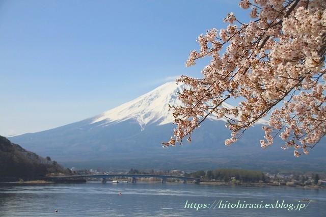富士山と桜 河口湖畔_f0374092_23064368.jpg