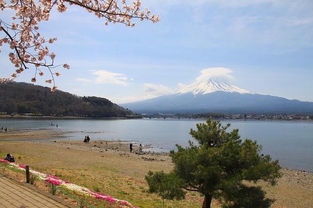 富士山と桜 河口湖畔_f0374092_23111084.jpg