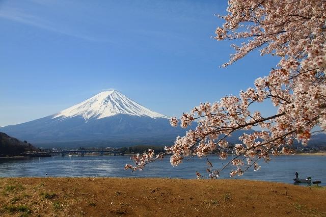 富士山と桜 河口湖畔_f0374092_23123398.jpg